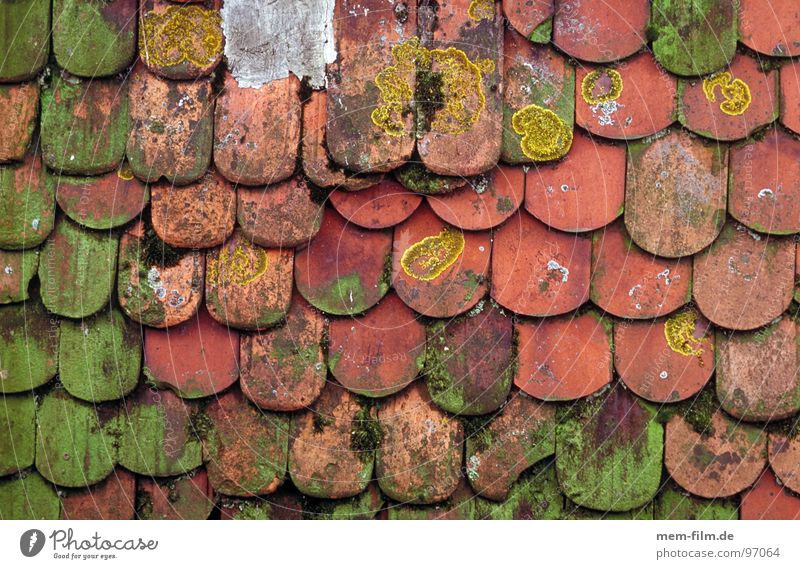 moss roof Roof Brick House (Residential Structure) Wood Skylight Pattern Window Background picture Detail Derelict Old beaver tails Hut Stone proliferate Tile
