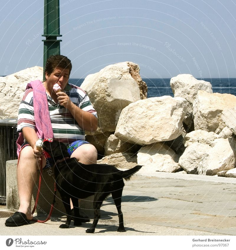 Dog Man Summer Ocean Warmth Eating Ice Physics Candy Division Lick Cooling Refrigeration share