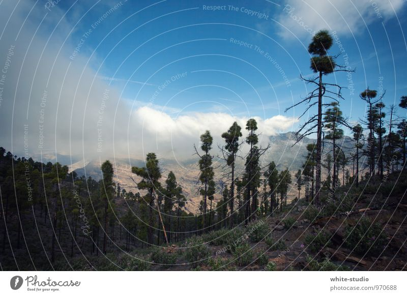 Nature Summer Landscape Clouds Mountain Fog Hiking Mountaineering Summery Survive Woodground Coniferous forest Cloud cover Lost Clearing Cloud field