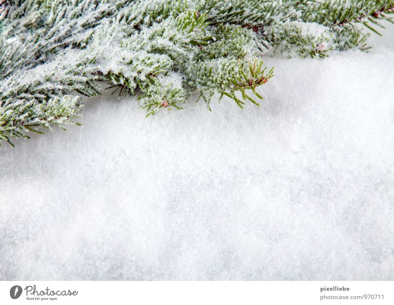 Nature Plant Christmas & Advent Green White Tree Winter Forest Cold Snow Feasts & Celebrations Bright Snowfall Ice Decoration Elegant