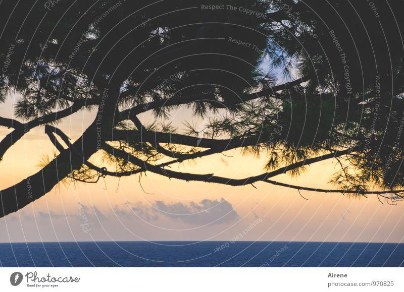 Nature Blue Tree Ocean Landscape Black Idyll Gold Beginning Positive Coniferous trees Adriatic Sea