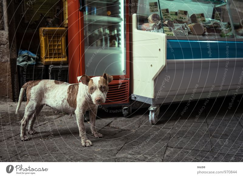 Dog Vacation & Travel City Travel photography Street Funny Style Dirty Fresh Idyll Gloomy Authentic Stand Wait Italy Cute