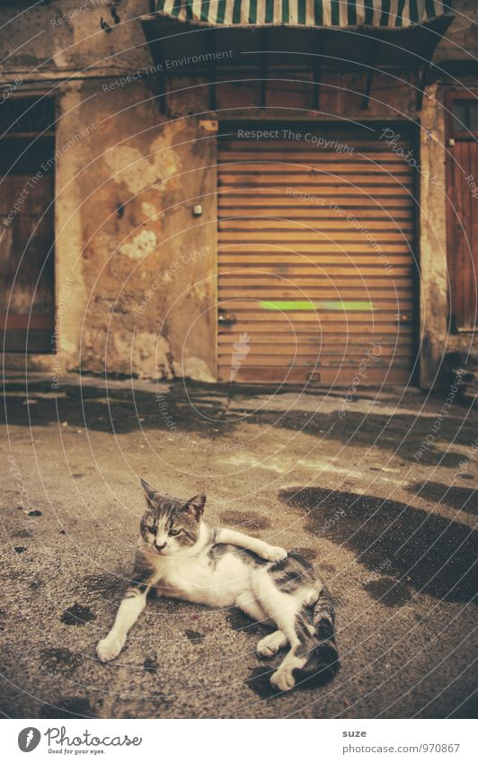 Tomorrow is another day ... Well-being Contentment Relaxation Vacation & Travel House (Residential Structure) Animal Town Old town Facade Street Pet Cat Lie