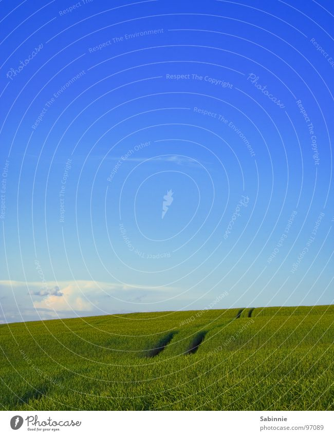 Sky Green Blue Clouds Landscape Field Earth Grain Agriculture Americas Blade of grass Cornfield Wheat Ear of corn Wheatfield