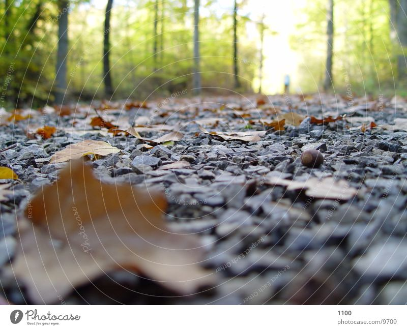 forest path Footpath Leaf Autumn Forest Under Light Tree Transport Street Floor covering Stone