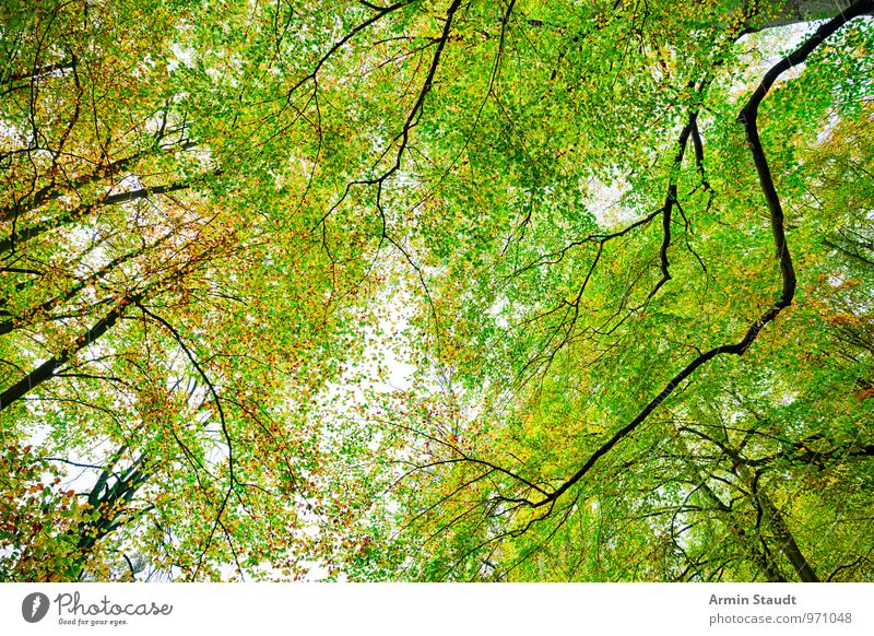 Autumn - Forest Nature Sunlight Tree Beech wood Beech tree Faded To dry up Growth Esthetic Authentic Exceptional Fantastic Far-off places Fresh Large Natural
