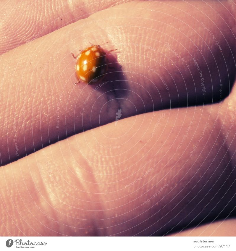 Hand White Sun Yellow Spring Orange Skin Small Pink Fingers Speed Point Ladybird Beetle Crawl 10