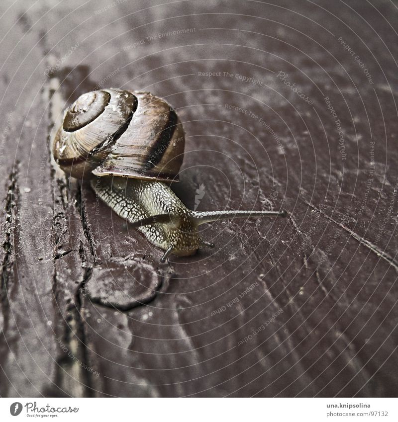 schnegge Flat (apartment) Animal Mobile home Varnish Snail Wood Crawl Slimy Mobility Snail shell Slowly Knothole Dawdle brown varnish To go for a walk
