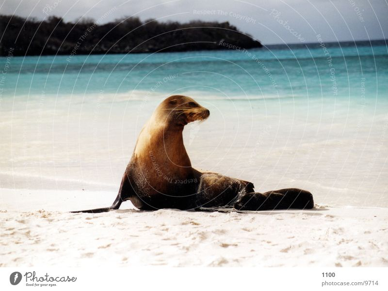 Water Ocean Beach Vacation & Travel Animal Sand Island Galapagos islands