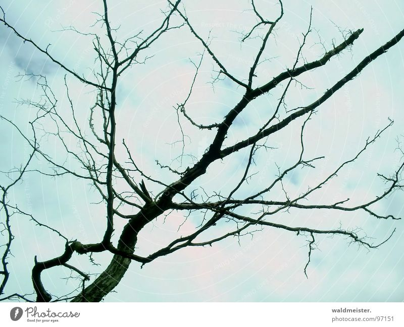 dead branch Branch Twig Tree Death Grief Hope Clouds Structures and shapes