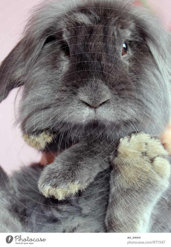 Nature Animal Spring Gray Healthy Exceptional Authentic Animal foot Esthetic Cool (slang) Easter Pelt Animal face Pet Hare & Rabbit & Bunny Brash