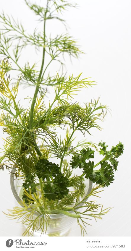 Parsley and dill Food Herbs and spices Nutrition Eating Organic produce Vegetarian diet Fasting Glass Lifestyle Healthy Eating Wellness Well-being Senses
