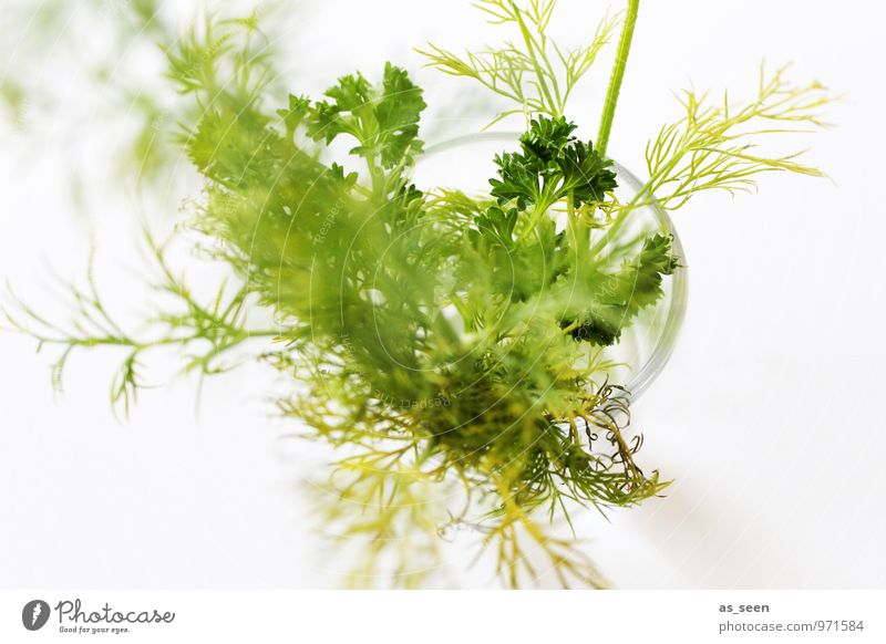 Plant Green Colour White Life Healthy Bright Food Modern Glass Fresh Esthetic To enjoy Nutrition Cooking & Baking Wellness