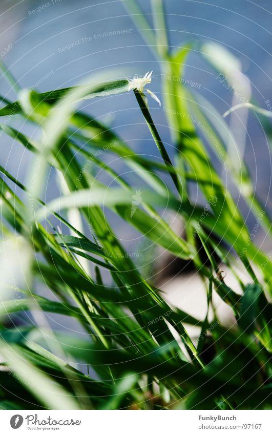 Nature Green Summer Joy Meadow Grass Coast Weather Environment Hope River Wild animal Brook Muddled Vista The Ruhr
