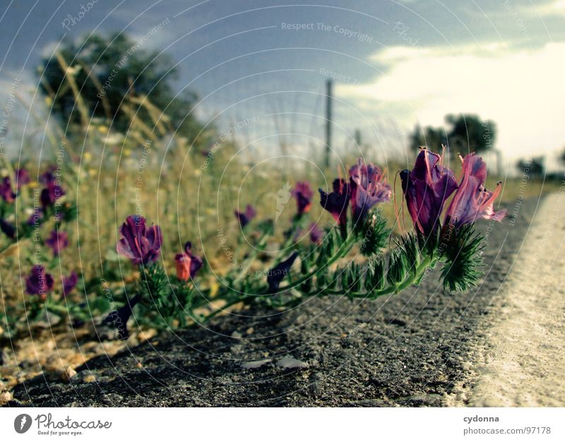 Sky Nature Green Beautiful Vacation & Travel Plant Sun Summer Flower Loneliness Street Landscape Life Blossom Line Trip
