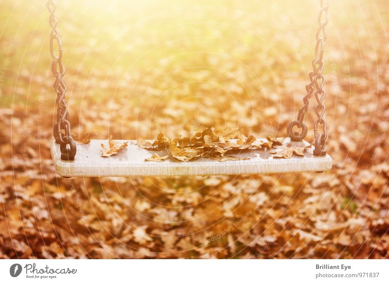 Abandoned swing in the autumn sun Nature Sunlight Autumn Wind Leaf Park Toys Sadness Yellow Emotions Moody Romance Grief Loneliness Poverty Leisure and hobbies