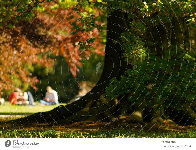 Human being Nature Summer Tree Relaxation Joy Meadow Grass Spring Garden Lie Park Sit Multiple Mecklenburg-Western Pomerania Schwerin