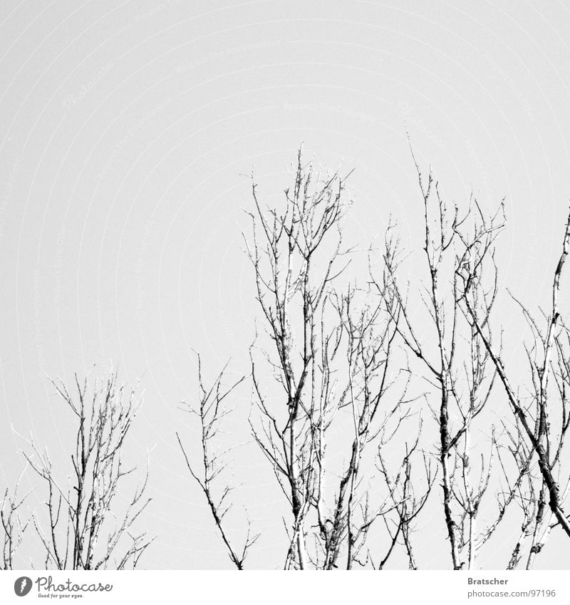 Sky Clouds Winter Cold Sadness Snow Gloomy Hiking Hope Grief Gastronomy Twig Distress Concert Snowscape Piano