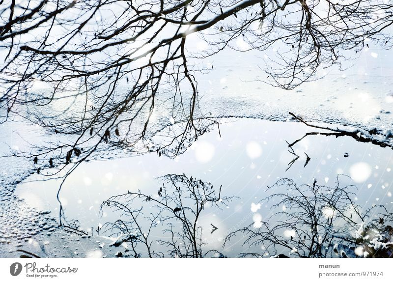ice age Nature Water Winter Ice Frost Snow Snowfall Tree Frozen surface Twigs and branches Lakeside Cold Natural Blue White Idyll Calm Colour photo