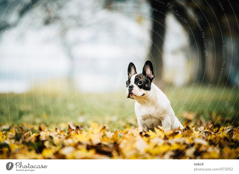 Dog Nature Plant White Tree Leaf Landscape Animal Black Forest Yellow Autumn Meadow Grass Small Brown