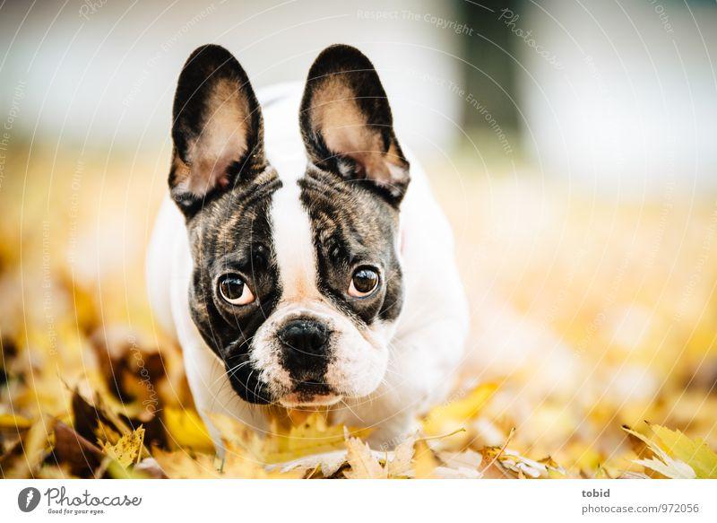 Dog Nature Leaf Joy Animal Movement Meadow Small Park Idyll Walking Happiness Observe Cute Beautiful weather Friendliness