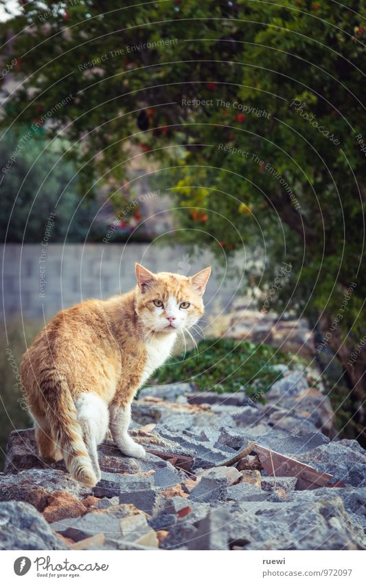Just another cat Relaxation Summer Nature Animal Wall (barrier) Wall (building) Pet Cat 1 Stone Rotate Looking Cuddly Wild Yellow Orange Red Love of animals