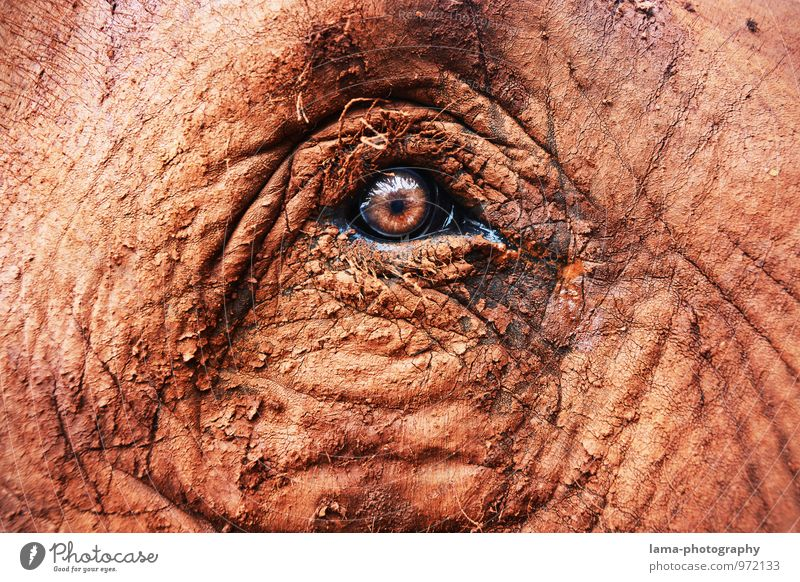 Honestly. Eyes Animal Animal face Elephant Elephant eye Elephant skin Looking Brown Trust Pupil Asia Thailand Wrinkles Colour photo Animal portrait