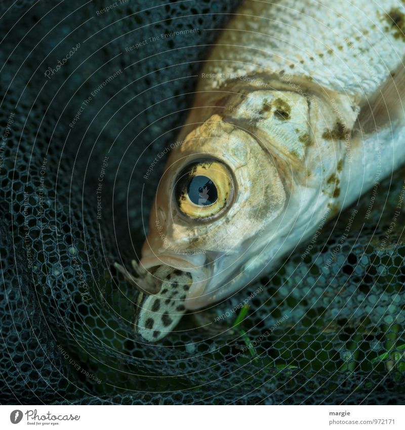 If the bite gets stuck in the throat... a fish was about to eat a newt Food Fish Nutrition Fishing (Angle) Environment Nature Animal Farm animal Dead animal