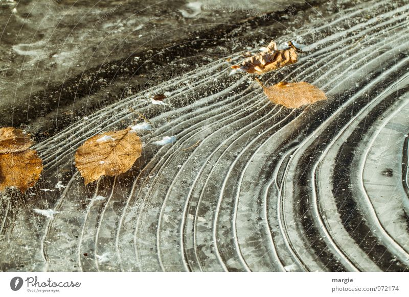 ice leaves Environment Nature Plant Animal Water Drops of water Autumn Winter Climate Weather Bad weather Ice Frost Leaf Lakeside River bank Pond Freeze Dry