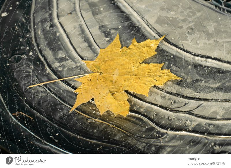 A yellow autumn leaf frozen in ice Environment Nature Plant Animal Water Drops of water Autumn Winter Climate Climate change Ice Frost Tree Leaf Waves Lakeside