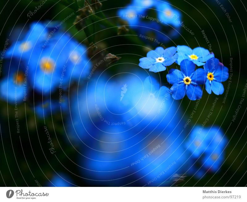 SHINING II Flower Blossom Blur Glittering Glimmer Hover Black Yellow Forget-me-not Balcony Plant Breathe Air Summer Leisure and hobbies Blue Garden
