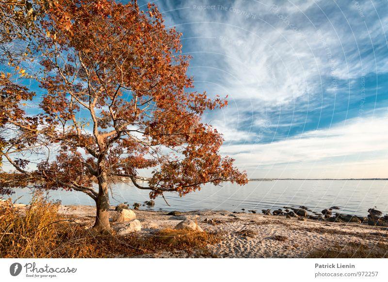 sea air Wellness Harmonious Well-being Contentment Senses Relaxation Calm Summer Sun Beach Environment Nature Landscape Plant Elements Sky Clouds Autumn Climate