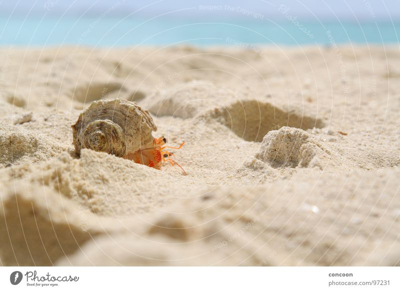Beach Walking Driving Asia Crawl Maldives Shellfish Hermit crab