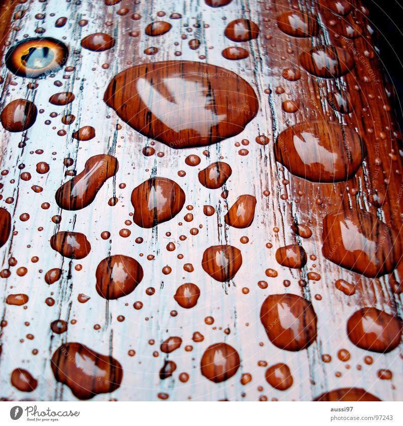 Sadness Autumn Wood Rain Weather Drops of water Grief Distress Refraction Breakage Hydrophobic