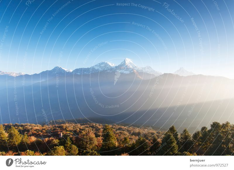 Good morning Anna Environment Nature Landscape Plant Air Cloudless sky Autumn Beautiful weather Tree Mountain Snowcapped peak Hiking Authentic Blue Brown Nepal