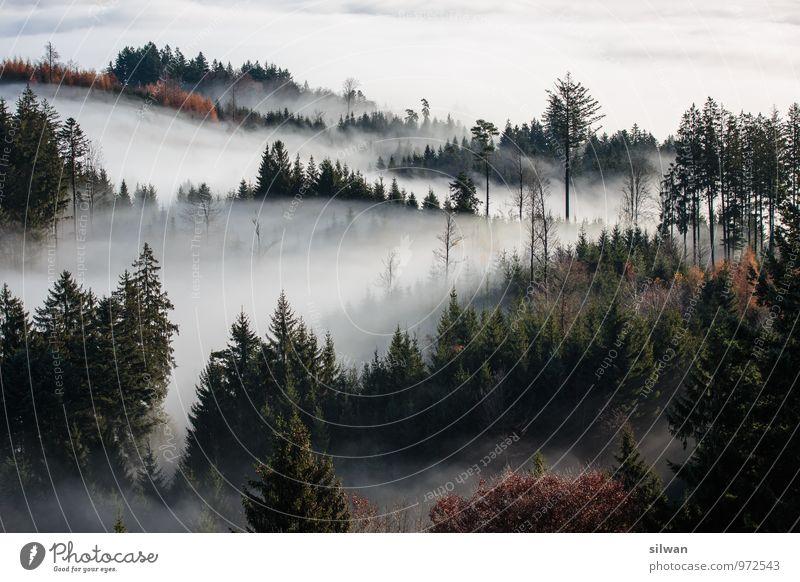 mystical view #2 Nature Landscape Autumn Weather Beautiful weather Fog Tree Forest Esthetic Dark Gigantic Soft Brown Gray Black White Secrecy Calm Dream