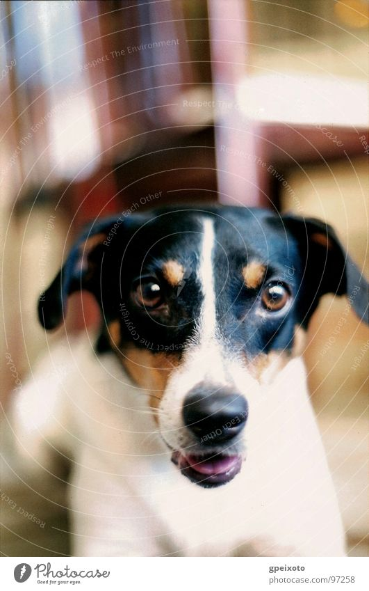 Dog's gauze Close-up Animal day dog Looking At Camera One Animal Indoors pets color image nobody vertical
