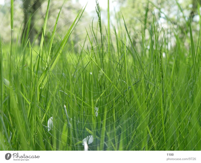 Green Meadow Grass Lawn Under Blade of grass