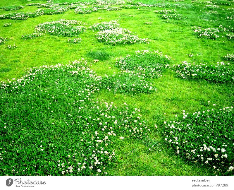 Flower Green Summer Grass Spring Soft Blanket Refreshment Comforting Appealing