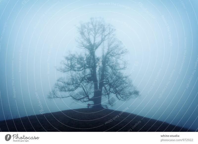 Nature Blue Water Tree Winter Dark Cold Environment Autumn Natural Exceptional Snowfall Fog Large Individual Esthetic