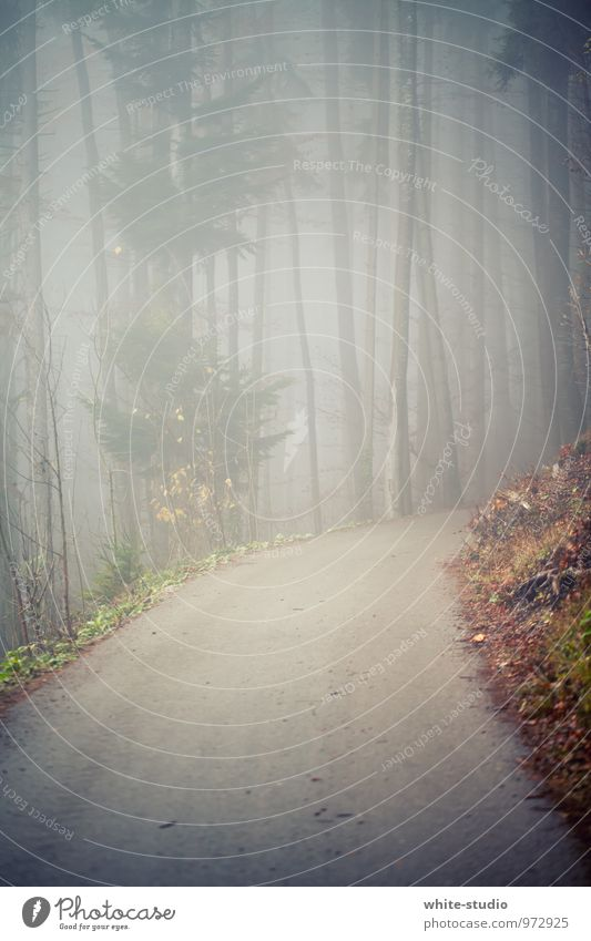 Please don't go in there! Tree Secrecy Calm Sadness Concern Death Fear Fog Shroud of fog Misty atmosphere Cloud forest Forest Footpath Lanes & trails Street