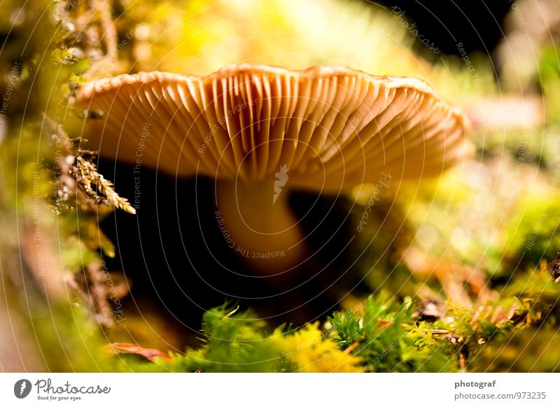 mushroom Food Nutrition Eating Lunch Dinner Life Summer Sun To talk Art Air Water Spring Autumn Weather Wind Gale Bushes Moss Leaf Wild plant Field Forest
