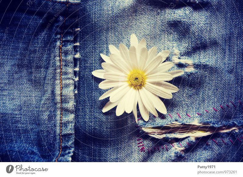flower power Plant Flower Blossom Jeans Denim Trouser leg Stitching Crack & Rip & Tear Flower power Cool (slang) Hip & trendy Natural Retro Blue Emotions
