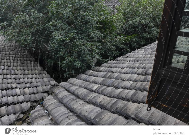 shock ventilation Tree Xitang China Village Building Architecture Interior courtyard Window Roof Eaves Roofing tile Wooden window Shutter Monument Old Gray