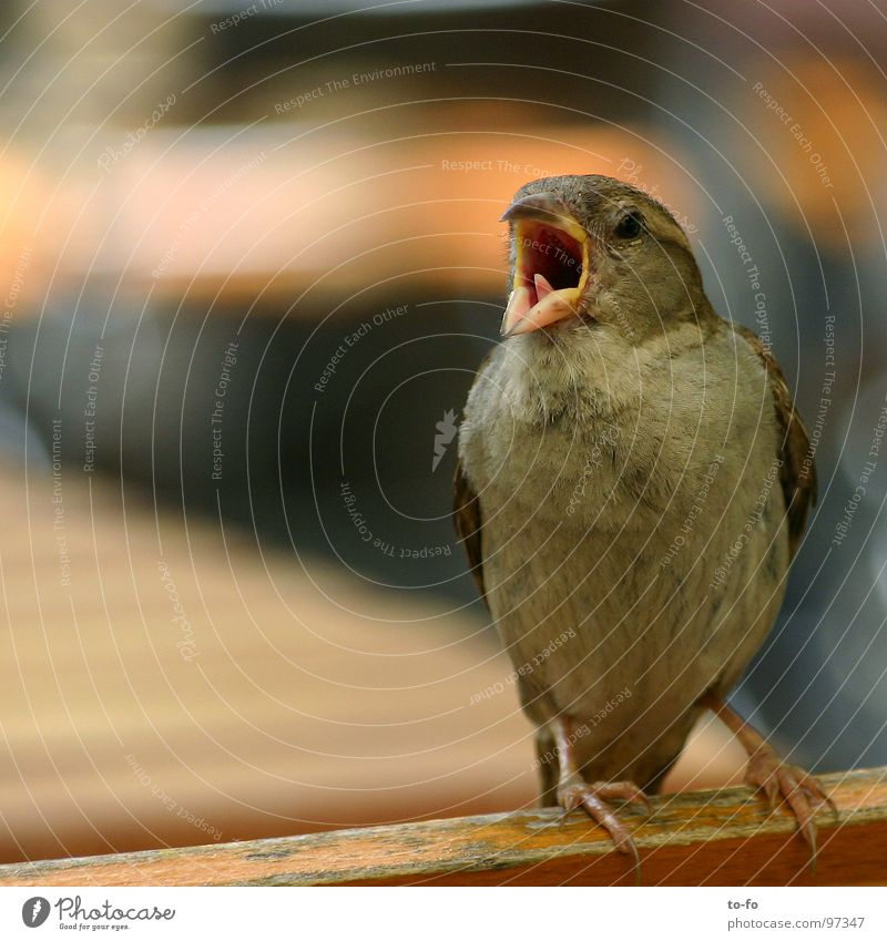 sparrow2 Colour photo Exterior shot Copy Space left Day Shallow depth of field Gastronomy To talk Animal Summer Beautiful weather Park Bird Pigeon Flying Scream