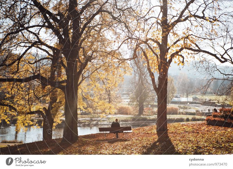 Human being Nature Tree Relaxation Loneliness Landscape Calm Environment Autumn Freedom Time Park Lifestyle Dream Leisure and hobbies Idyll