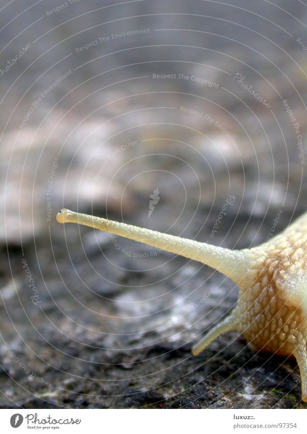 Eyes Emotions Transport Asphalt Touch Traffic infrastructure Snail Crawl Feeler Slowly