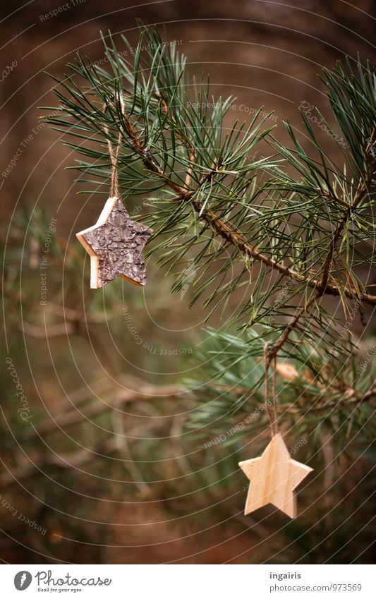Back to nature Christmas & Advent Nature Plant Tree Coniferous trees Branch Pine Pine needle Wood Star (Symbol) Hang Sharp-edged Thorny Brown Green Moody