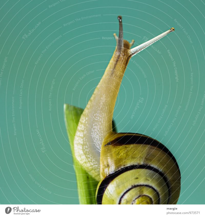 Sweet snail Environment Nature Leaf Animal Snail Animal face 1 Esthetic Friendliness Yellow Green Emotions Beautiful Attentive Watchfulness Curiosity Interest