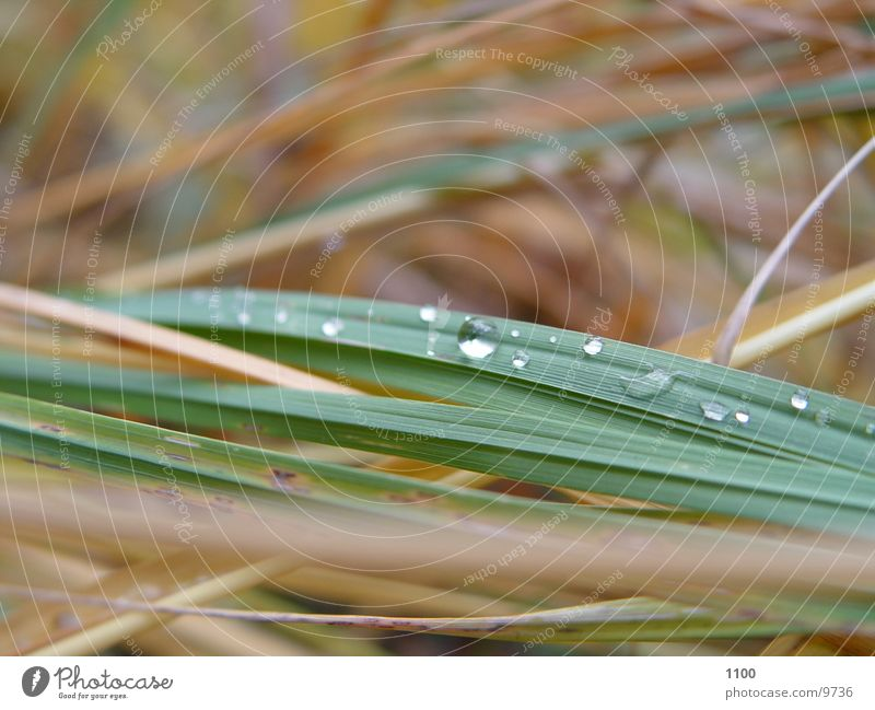 Grass Drops of water Rope Blade of grass